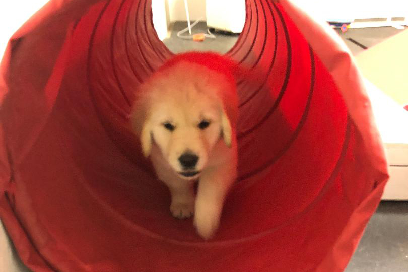 Puppy in Tunnel